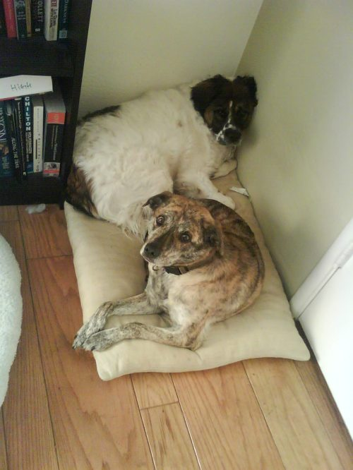 sharing-the-dog-bed1
